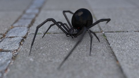 Picture of black spider with white spots