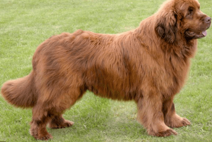 Which dog breed is best for family