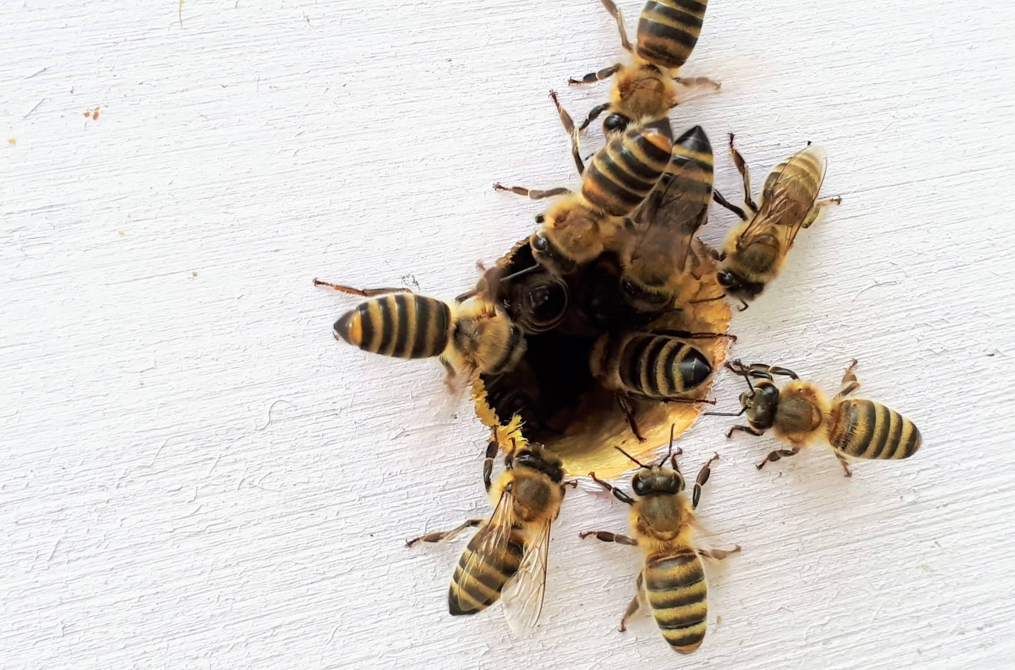 Learned behaviour: back-to-school bugs