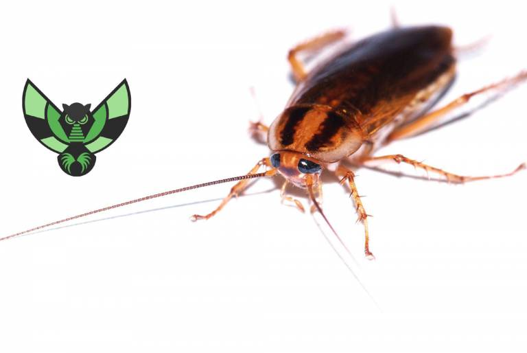 How to control a cockroach infestation