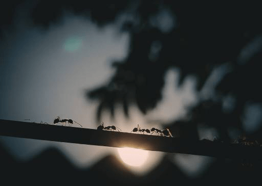 Ant Season Evening