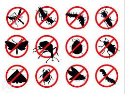 شركة إبادة حشرات في القاهرة