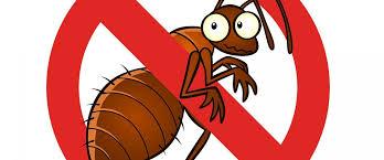 شركة مكافحة حشرات في مصر الجديدة
