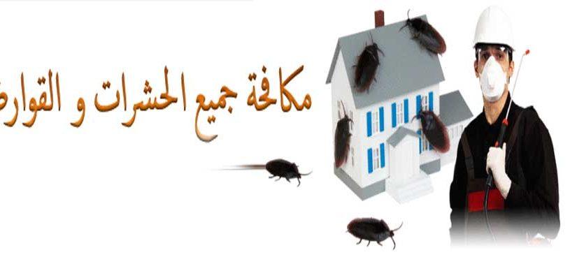 شركة مكافحة حشرات في التجمع الخامس