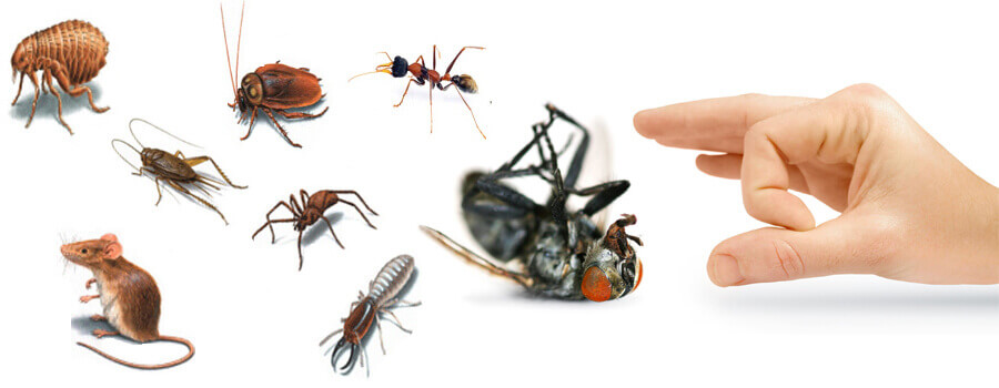 شركة مكافحة حشرات في الجيزة