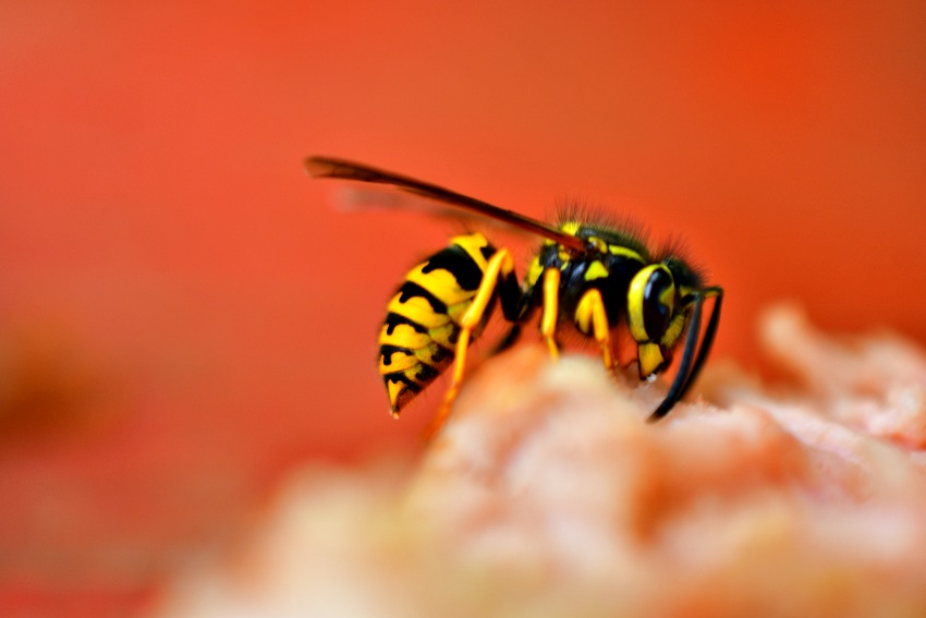 A picture containing animal, insect Description automatically generated