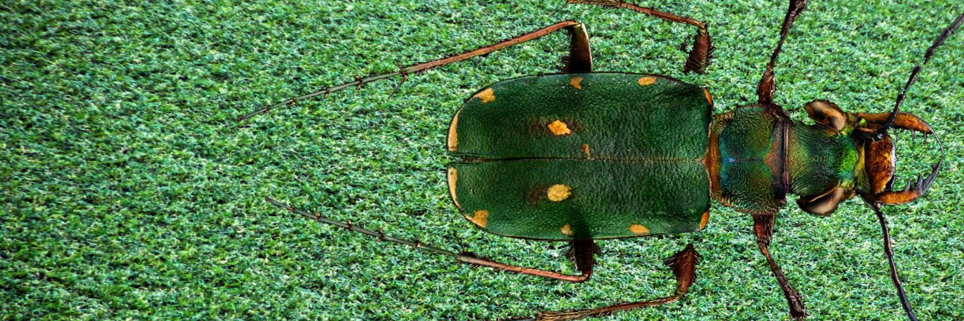 Pest Control – Calling An Expert Exterminator – Charlotte