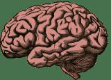 impact des pesticides sur le cerveau - santé humaine