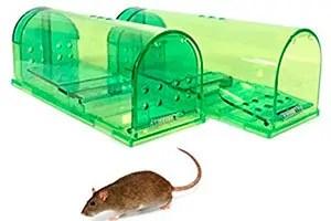 2 Humane mice traps
