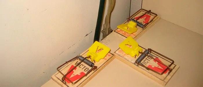 3 mice traps