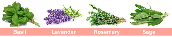 4 Fragrant Plants