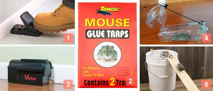 5 mice traps collage