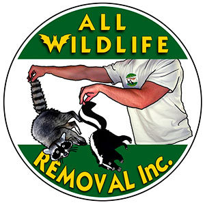 All Wildlife Removal Inc.