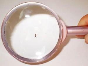 Ants extermination