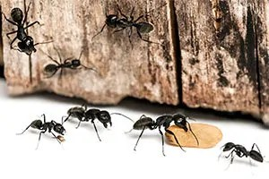 Ant's source