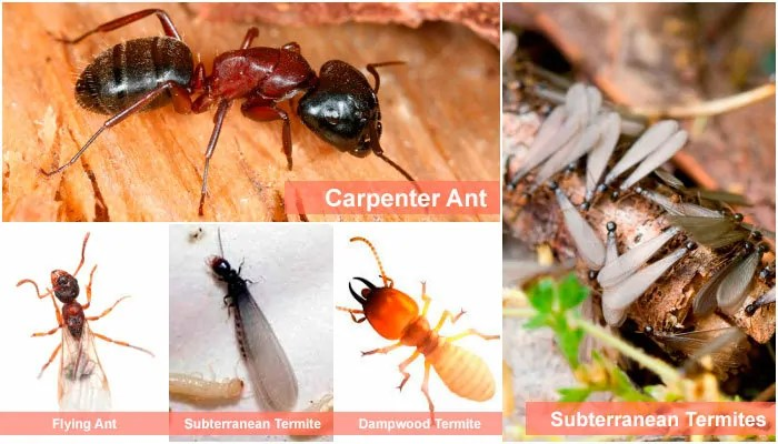Pictures of termites and ants