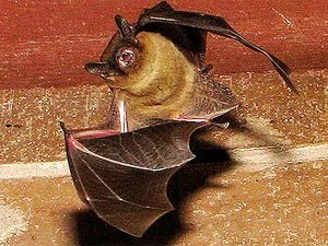 Information about the pathways of bats in your house