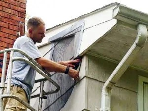 Remove bats from your attic