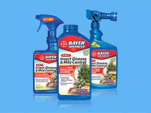 Bayer Advansed insect disesease