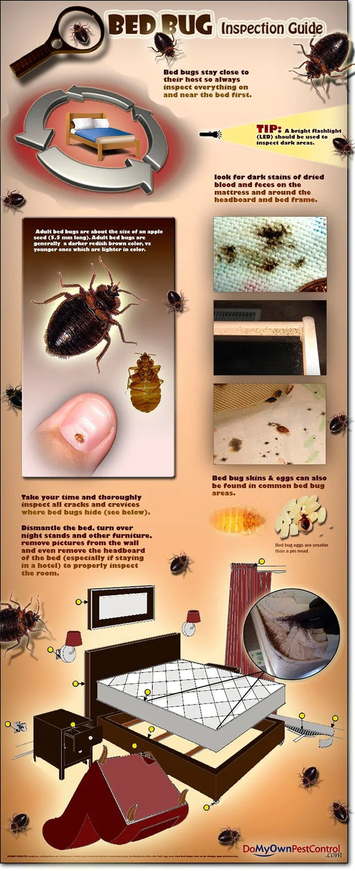 How Does A Bed Bug Infestation Get Started And How Can One Be