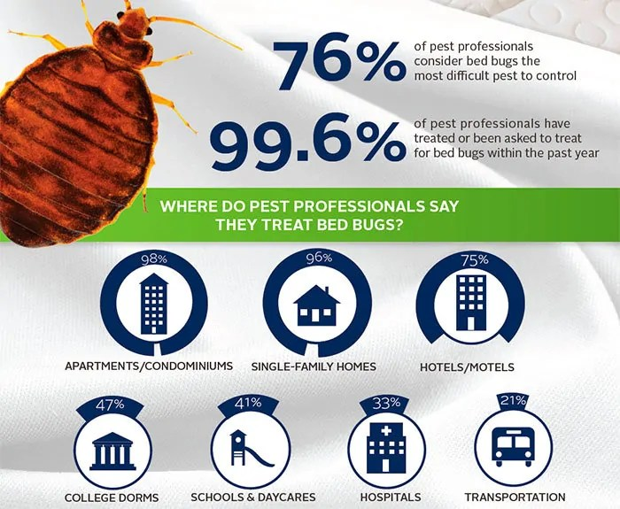Where do pest professionals say they treat bed bugs?