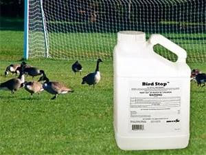 Bird Stop and Goose Repellent