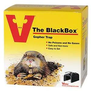 Victor BlackBox trap