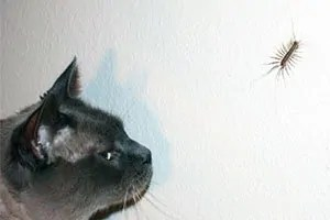 Centipede on the wall