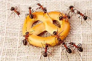 Sick Of The Ants Here S How To Get Rid Of Tiny Ants In The Kitchen