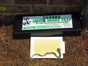 Cahaba small snake trap