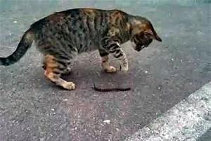 Cat and millipede