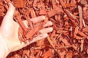 Cedar in hand
