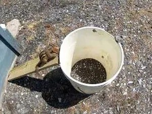 Simple chipmunks trap with bucket