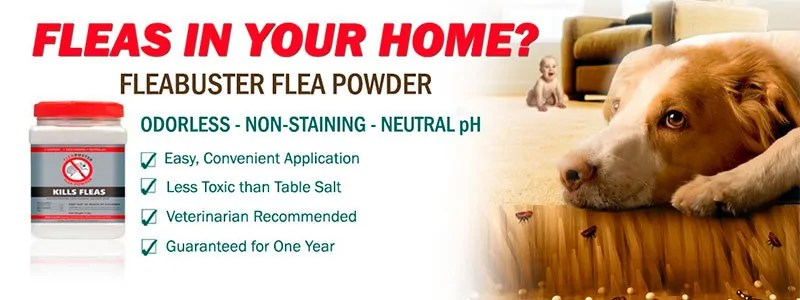 Fleabusters flea powder