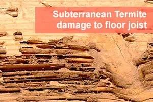 Subterranean termite damage to floor joist