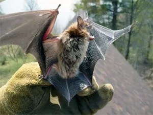 How to Get Rid of Bats: Know ALL the Existing Solutions Cost Of Adding A Bat To An Existing House on