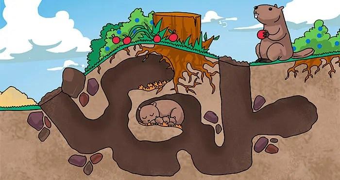 Groundhog scheme