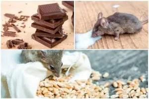 House mice food