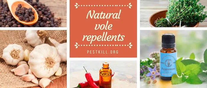 Infographic: Natural Vole Repellents