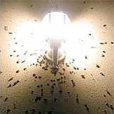 Lights at night attract