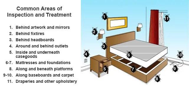 Kill Bedbugs Where They Hide!