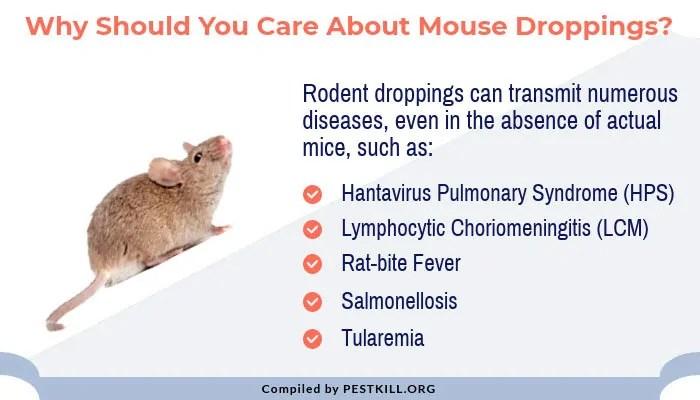 Infographic: Mice deseases