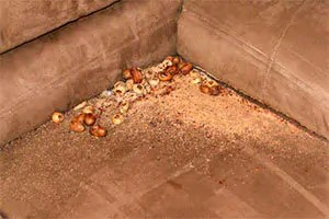 Mice nest in couch