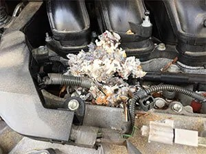 Mice nest in car