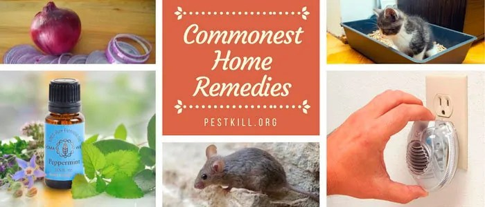 Mice Home Remedies