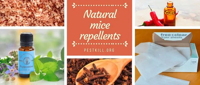 Infographic: Natural Mice Repellents