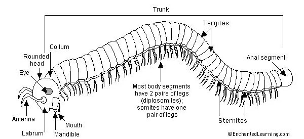 What Are Millipedes Everything You Need To Know About Millipedes In
