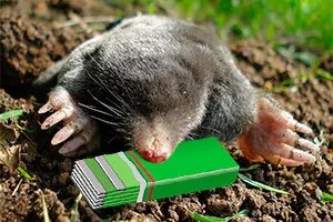 Mole and chewing gum
