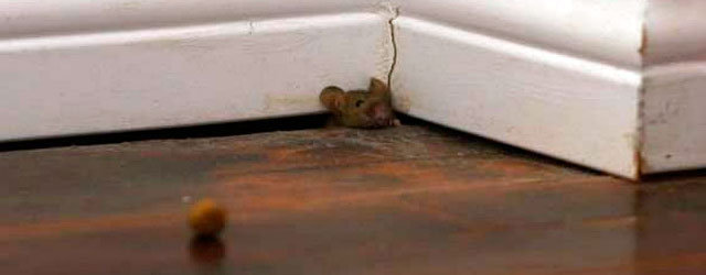 Theres A Mouse In My Room Is It Safe To Sleep Questions And