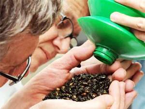 Japanese beetles: natural control